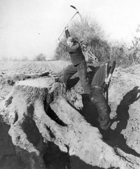 Lanza del Vasto - Tournier, 1948 : la souche.